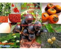 Japanska jabuka kaki, Crna malina, Kamcatika, Sibirski kiwi, aronija,goji
