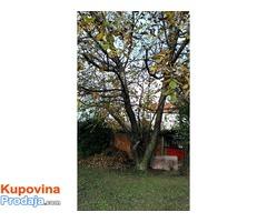 Prodajem orahova stabla