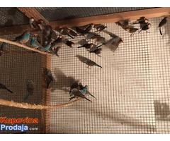 Egzoticne ptice