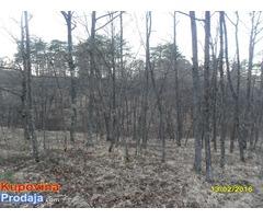 Prodajem šumu na Zlatiboru