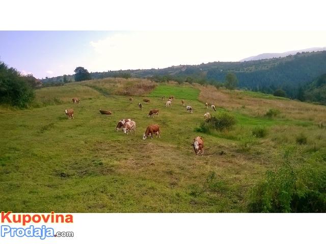 Hitno..7.5 hektara, Prodajem porodicno domacinstvo u blizini Kokinog Broda