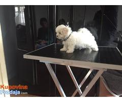 Grooming izložbeni sto za pse