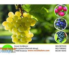 Vocne i lozne sadnice, najbolji kvalitet, najpovoljniji uslovi