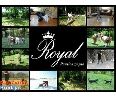 ROYAL - pansion za pse u Beogradu