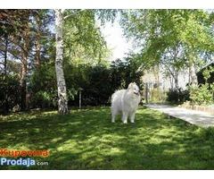 ROYAL - pansion za pse u Beogradu