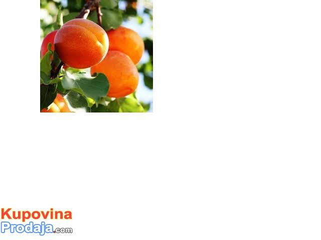 orezivanje voća i vinove loze