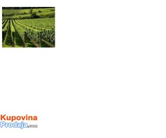 podizanje voćnjaka i vinograda