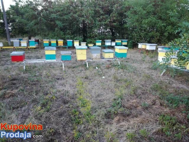 Rojevi sa maticama, pčelinja društva
