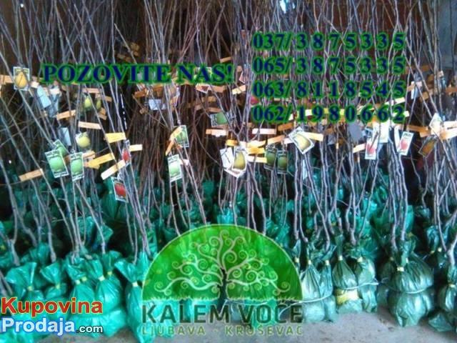 Voćne sadnice i lozni kalemovi
