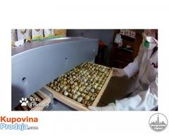 Inkubatori za SVA vrsta jaja