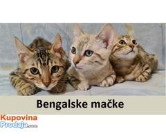 Bengalske mačke sa papirima