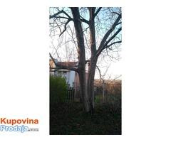 Prodajem orahovo drvo