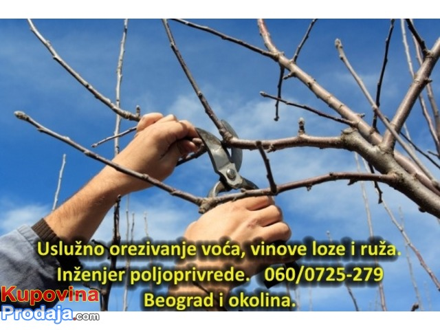 Orezujem voće, vinovu lozu i ruže