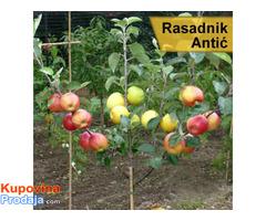 Rezervacija i prodaja voćnih sadnica jesen 2021 - Fotografija 1/6