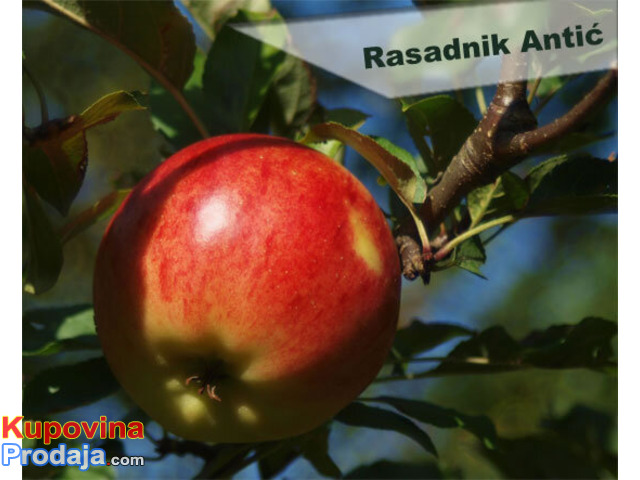 Rezervacija i prodaja voćnih sadnica jesen 2021 - 2/6