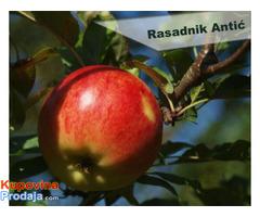 Rezervacija i prodaja voćnih sadnica jesen 2021 - Fotografija 2/6