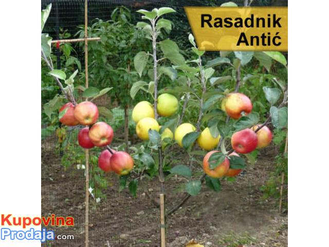 Rezervacija i prodaja voćnih sadnica jesen 2021 - 4/6