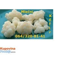Mlečni kefir, KEFIRNA ZRNCA, Tibetanska gljiva