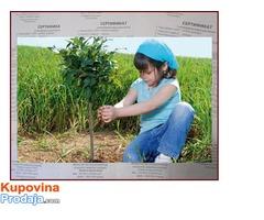☆ Voćne sadnice iz Porodičnog rasadnika, Provereno!