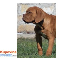 Stenci BORDOSKE DOGE - dobrog porekla